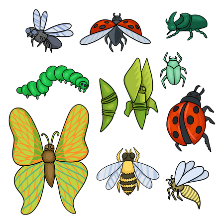 A set of different insects: bee, caterpillar, cocoon, butterfly, fly, wasp and beetles.