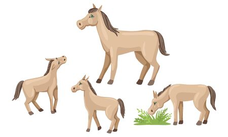 Foals in different poses, mom horse with children, vector isolated characters on white background. Animals of the village for a walk. Cartoon flat style illustration. Illustration