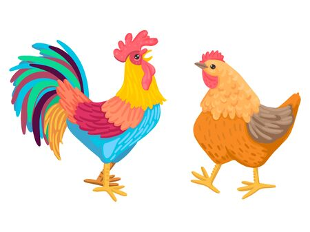 Rooster and chicken go. A pair of domestic birds. Vector characters are not white background.