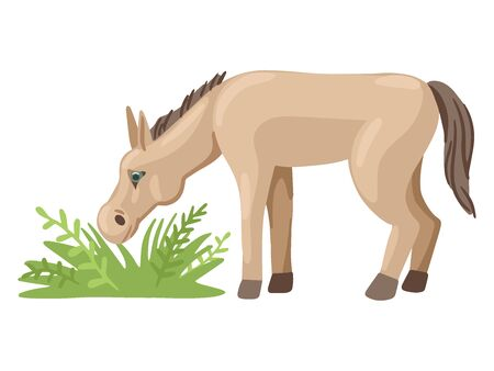 Foal or a donkey grazes in a meadow, eats grass. Vector character.
