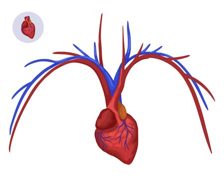 Heart and arteries. Vector illustration and icon of human organ.