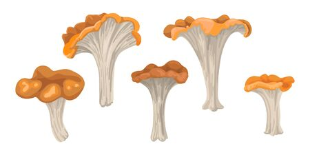 Large and small forest mushrooms, farm product, clipart of vegetables. Vector flat cartoon illustration