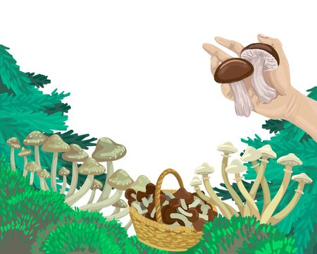 Mushrooms in the forest, pick mushrooms in the basket, the hand holds the fruit. Vector concept illustration.