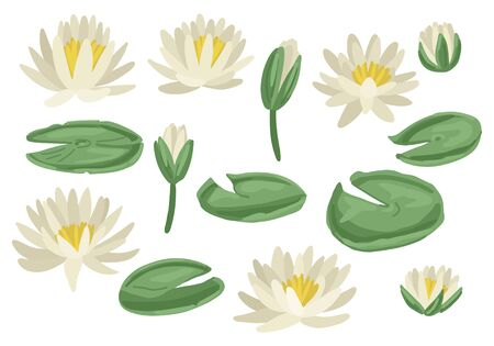 Lily pads set. Isolated on white background. Vector illustration