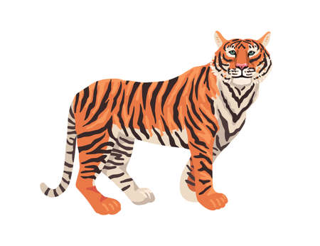 Tiger, animal on a white background. Vector flat drawing.