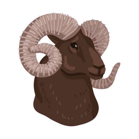 Head of Altai mountain ram. Vector illustration isolated on white background. 矢量图像
