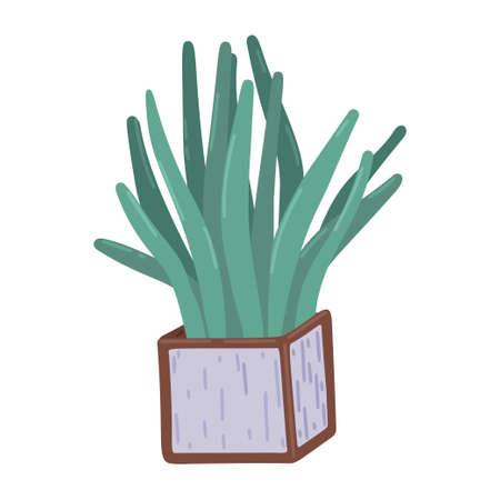 Sansevieria. Square pot with Sansevieria, indoor plants, decor element, interior design, floristry. Simple cartoon flat drawing. Vector illustration 矢量图像