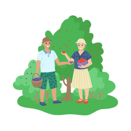 Retired old people, hobbies and activities, picking berries in the garden, walking in nature. Vector cartoon illustration
