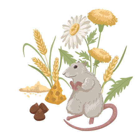 Domestic rat with plants, rodent food, pet, nuts, grain and cheese. Children s illustration. Vector cartoon illustration