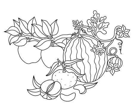 Fruit harvest. Watermelon sprout, tangerine with leaves, apples growing on a branch. Black outlines for children s coloring, outlined design. Vector drawing