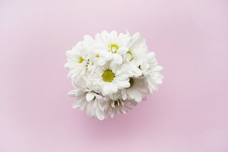 womanly: Bouquet of chamomile on a pink background. Flat lay. Stock Photo