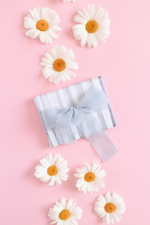 Gift box with blue ribbon bow. Pattern made of white chamomile on a pink pastel background
