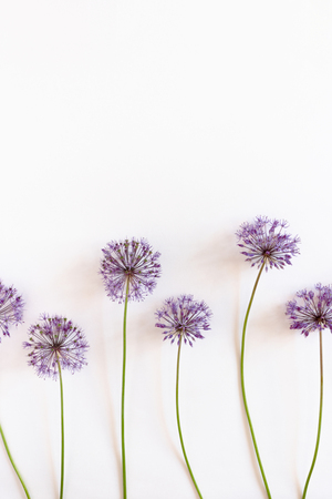 Decorative onion flowers on a white background with copy space