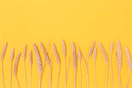 Row of wheat spikelets on a yellow background. Harvest concept with place for text. 스톡 콘텐츠