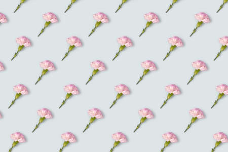 Carnation flowers pattern on a blue pastel background. Creative spring floral concept.
