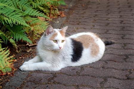 calico cat: Calico cat Stock Photo