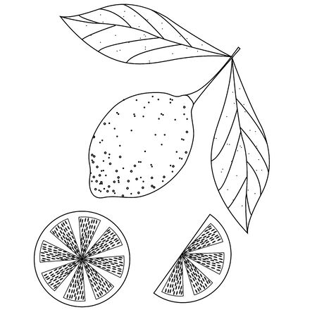 unfurl: Hand drawn sketch style set of lemon fruit with leafs and sliced lemon. isolated on white background