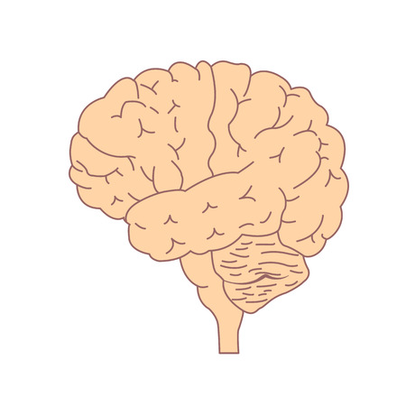 Isolated brain side view. Illustration