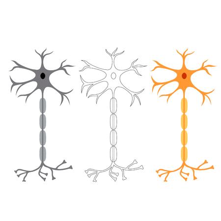 cellule nervose: cellule nervose dei neuroni, isolato su sfondo bianco Vettoriali
