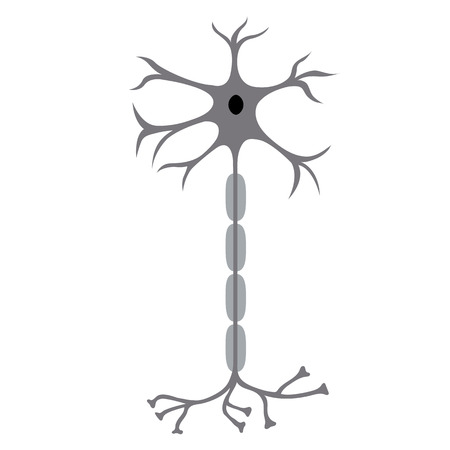 Nerve Cell Neuron, isolated on white background