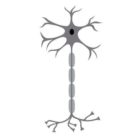 Zenuwcel Neuron, geïsoleerd op een witte achtergrond Stockfoto - 63395689