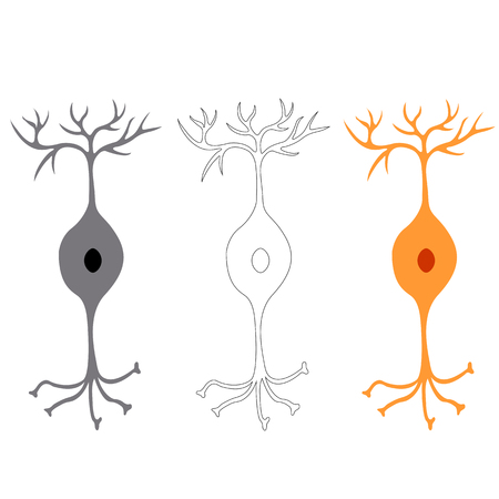 neurone: Bipolar neuron, nerve cells neurons, isolated on white background