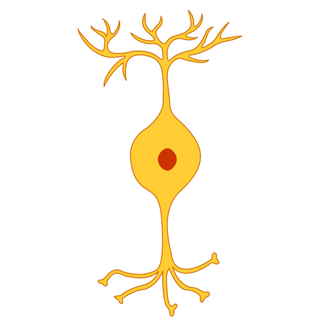 nerve cell: Bipolar neuron, Nerve Cell Neuron, isolated on white background Illustration