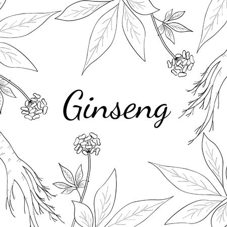 Wortel en laat panax ginseng, schetsstijl. Hand tekenen vintage illustratie van geneeskrachtige planten. Voor traditionele geneeskunde, tuinieren. Vierkante banner, sjabloon. Stock Illustratie