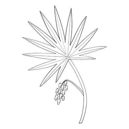 Saw Palmetto (Serenoa repens). Hand drawn botanical illustration. Medicinal tree.