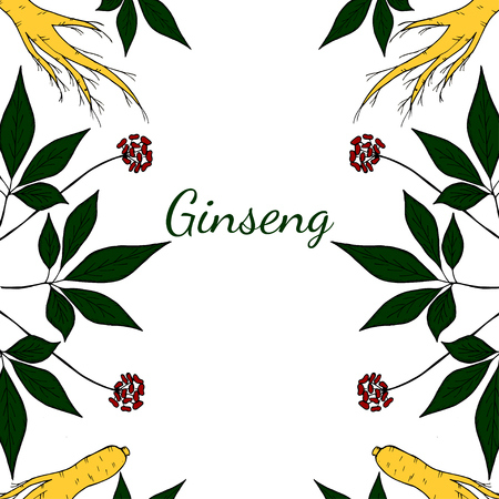 energy healing: Root and leaves panax ginseng, sketch style. Hand draw vintage illustration of medicinal plants, pattern. For traditional medicine, gardening. Biological additives are.
