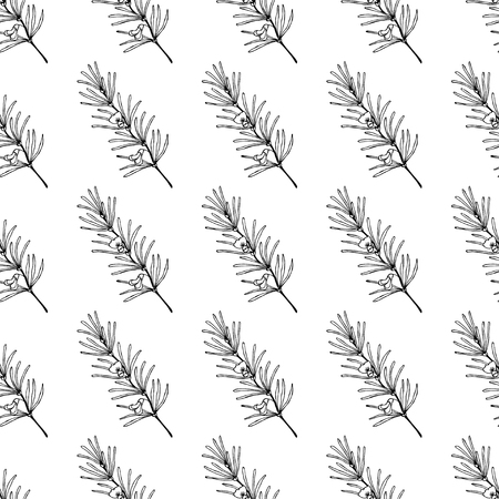 Rooibos tea plant, leaf, flower. Seamless pattern. Hand drawn ink sketch illustration, lineart. African rooibos tea, hot drink. Herbal tea. Isolated on white background.