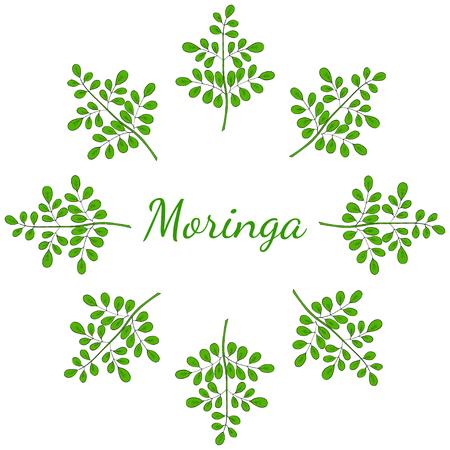 Moringa oleifera, medicinal plant. Hand drawn botanical sketch illustration, frame. Template, banner in color.