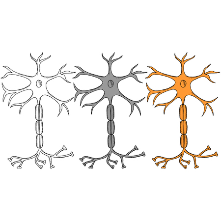 Nerve Cell Neuron, neuron, in sketch style in color. Isolated on white background. Ink hand drawn illustration. Set. Illustration