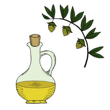 Jojoba nut, seed, fruit, branch, leaf, fruit, isolated on white. Organic oil, jug, bottle, nutrition healthy food. Image of medical plants. Hand drawn ink vintage retro illustration.