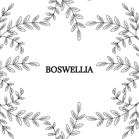 Boswellia, border Stock Vector - 81693039