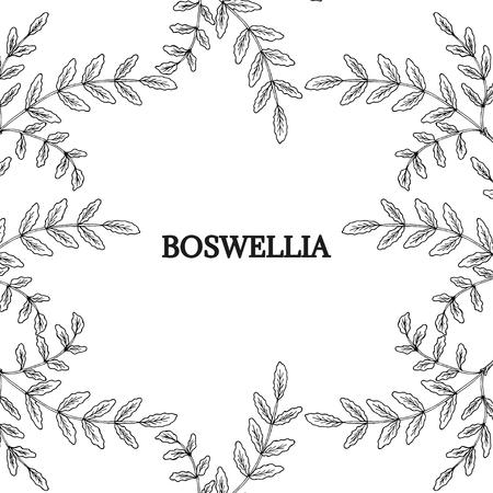 Boswellia, border