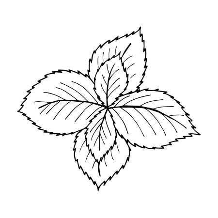 민트 잎과 흰색 백 드롭 라이너 공장