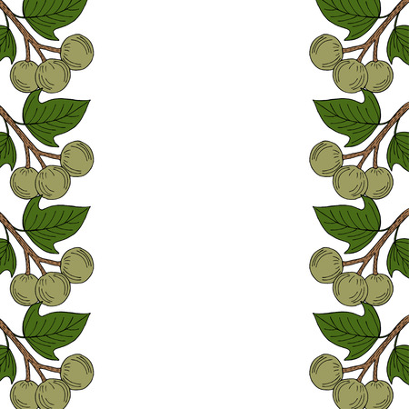 Kukui nut tree (Aleurites moluccana). Nuts, plant, berry, fruit natural organic butter ingredient. Hand drawn ink sketch illustration. Treatment, cosmetics, food ingredient. Isolated. Border.