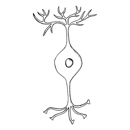 Bipolair neuron, zenuwcel neuron, geïsoleerd op een witte achtergrond. Hand tekenen illustratie in schets stijl.