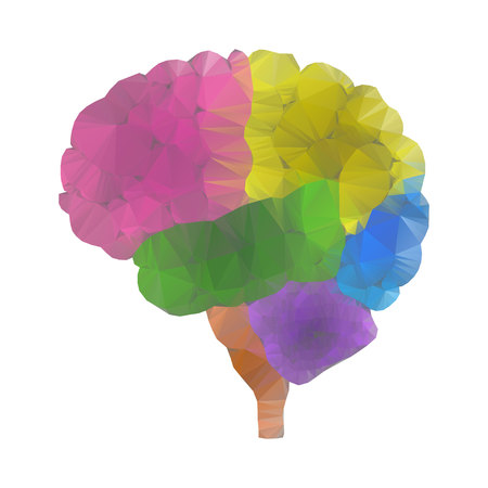 Shares of the brain, low poly polygon design. Polygonal triangle style illustration of human brain for medical design, study or concept for logo, scientific background. Isolated brain side view.