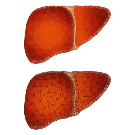 Liver polygon isolated