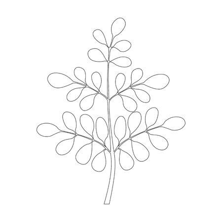Black and white line illustration of moringa tree Illustration