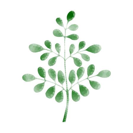 Moringa polygon Vector illustration.