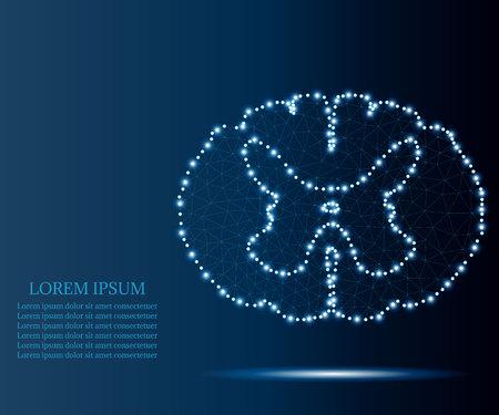 spinal cord polygon blue stars 1 Иллюстрация
