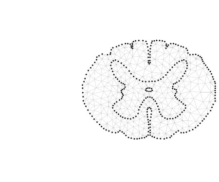 Spinal cord polygon in black and white colors