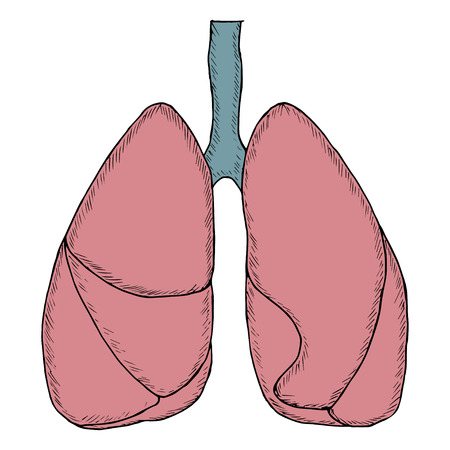 human lungs, sketch in color Stock Illustratie