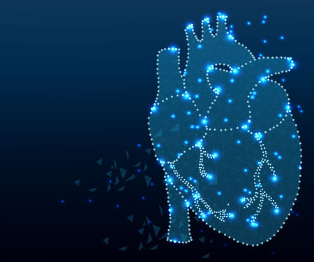 Polygonal human heart in low poly polygon style illustration with connecting points dots , isolated on white background. Anatomical heart for medical or scientific design, wireframe concept. Ilustracja