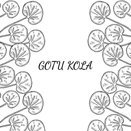 Gotu kola plant, isolated on white background. Centella asiatica, cosmetic and medical herb. Hand drawn sketch vector illustration. Frame, border.