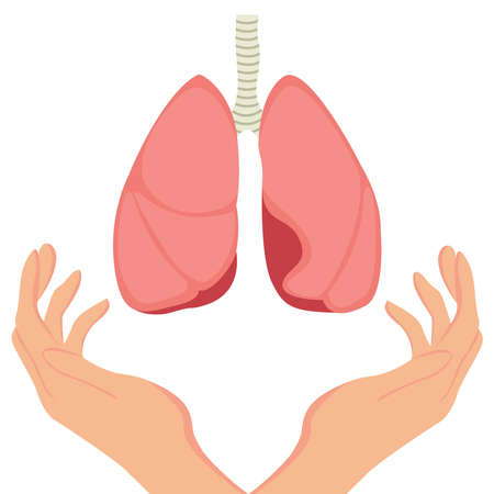Hands hold human lungs. Vector illustration of human lungs in flat style. Lungs icon, isolated on white background. Lungs of a healthy person. Anatomy, medicine concept. Healthcare.