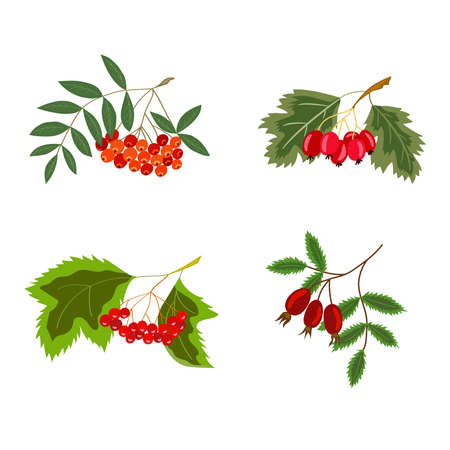 Rowan, hawthorn, viburnum, rosehip color, set Stock Illustratie